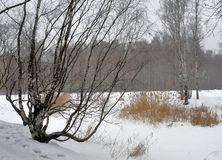 Winter forest in the North of Russia royalty free stock photos