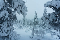 Winter forest in northern Finland. Beautiful winter landscape with snow covered trees Royalty Free Stock Photography