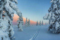 Winter forest in northern Finland. Beautiful winter landscape with snow covered trees Royalty Free Stock Photos
