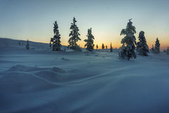 Winter forest in northern Finland. Beautiful winter landscape with snow covered trees Stock Photo