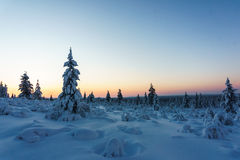 Winter forest in northern Finland. Beautiful winter landscape with snow covered trees Stock Image