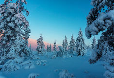 Winter forest in northern Finland. Beautiful winter landscape with snow covered trees Stock Photography
