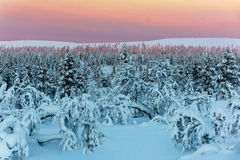 Winter forest in northern Finland. Beautiful winter landscape with snow covered trees Royalty Free Stock Image