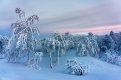 Winter forest in northern Finland. Beautiful winter landscape with snow covered trees Stock Images