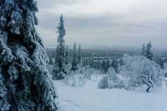Winter forest in northern Finland. Beautiful winter landscape with snow covered trees Royalty Free Stock Photo