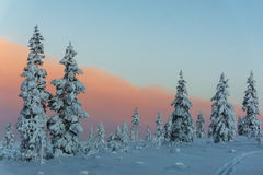 Winter forest in northern Finland. Beautiful winter landscape with snow covered trees Royalty Free Stock Images