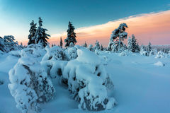 Winter forest in northern Finland. Beautiful winter landscape with snow covered trees Stock Photos