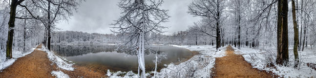Winter forest panorama Stock Image