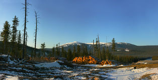 Winter forest panorama. Panorama of the mountain Argidjack in Siberia, Russia. It is located near Krasnoyarsk Royalty Free Stock Image