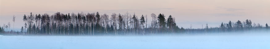Winter forest panorama with many snow. And colorful sky Stock Images