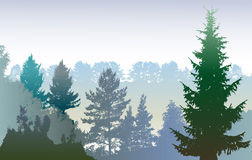 Winter forest panoramic landscape with silhouettes of evergreen trees Royalty Free Stock Photography