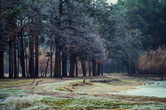 Winter forest park with frost and crows Stock Photography