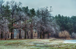 Winter forest park with frost and crows Stock Photos