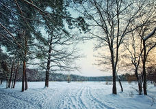 Winter forest park in snow at evening Stock Images