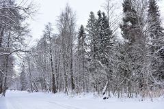 Winter in the forest is a particularly beautiful phenomenon. A huge amount of snow, which is covered with everything around. Is a beautiful landscape that you stock photo