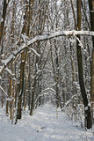 Winter forest path Royalty Free Stock Photography