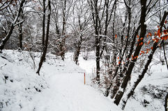 Winter Forest Path Stock Image