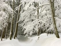 winter forest path, fresh snow covered trees Royalty Free Stock Photos