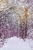 Winter forest. Path in winter forest with heavy snow stock image