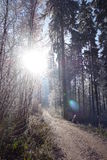 Winter forest path Royalty Free Stock Image