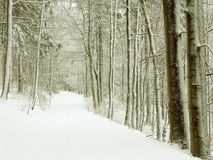 Winter forest path, snow covered trees Royalty Free Stock Image