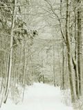 Winter forest path, snow covered trees Stock Photography