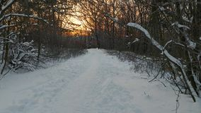 Winter forest path. Walking on snowy forest path, POV footage stock video footage