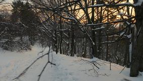 Winter forest path. Walking on snowy forest path, POV footage stock video