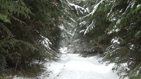 Winter forest. Path in the woods in the snow stock footage