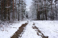 Winter in the forest. Royalty Free Stock Photography