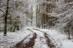 Winter in the forest. Stock Image