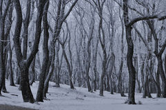 Winter forest. The photo was taken in the Spa town of Pyatigorsk on a grief Mashuk Stock Image