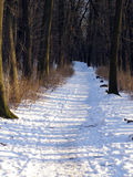 Winter forest photography Royalty Free Stock Image