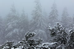 Winter forest. Picture of winter with fog in the Woods royalty free stock photos