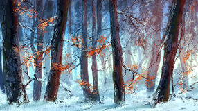 Winter forest. Picture of winter forest at sunset Royalty Free Stock Photo