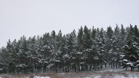 Winter forest pine forest with snow nature landscape beautiful tree winter christmas background. Winter forest pine forest with snow nature landscape beautiful stock video
