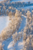 Winter forest plain Royalty Free Stock Photography