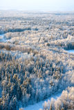 Winter forest plain Royalty Free Stock Photo