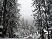 Winter forest at Poiana Brasov ski resort