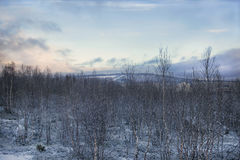 Winter forest and quarry on the hill. View of winter forest and a quarry on the hill Stock Images