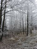 Winter forest Rahachow Stock Image