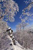 Winter forest with rime on trees Royalty Free Stock Images