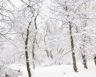 Winter forest and river Stock Photo