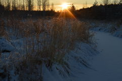 Winter Forest River in the early morning sunrise Royalty Free Stock Photos