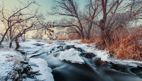 Winter forest. River Krinka (Ukraine Stock Photo