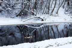 Winter forest river under the snow Royalty Free Stock Photo