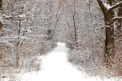 Winter forest road Royalty Free Stock Image