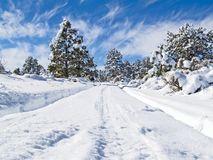 Winter forest road Stock Images