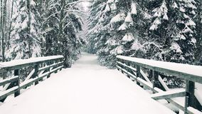 Beautiful winter forest road and the bridge in falling snow. Winter forest road and the bridge Royalty Free Stock Images