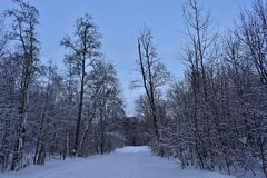 Winter forest and the road through it royalty free stock photo